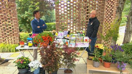 Gardening Tips with Paraic Horkin